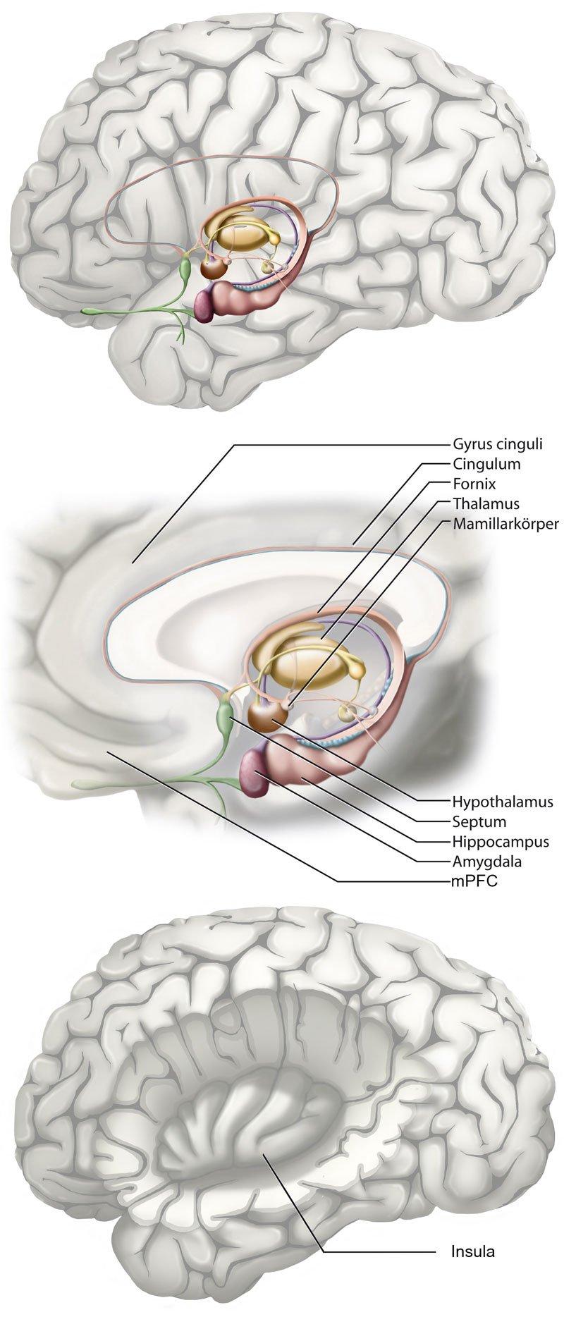 Neurobiologische Hintergründe von Brainspotting